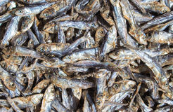 Small dried fishes on market table for sell. Sea mackerel on display. Sea food ingredient. Grey and silver fishes from fisherman`s catch. Healthy seaside food Royalty Free Stock Photo