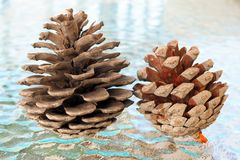 Small Dried Open Pine Cones on Glass Table. Detail of small dried pine cones sitting on a translucent glass table. Natural authentic found ornaments royalty free stock images