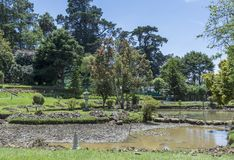 Small dried pond in the park. Small dried pond in the Victoria park in Sri Lanka stock images
