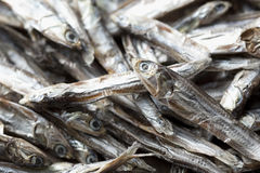 Small dried sardines Stock Photography