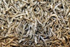 small dried sardines Stock Image