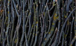Small dried twigs bundled up together for feeding to light fire.  stock photography