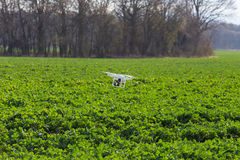 Small drone above the field. Small drone is flying above the large green field royalty free stock photos