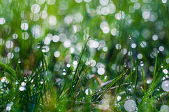 Small drops of dew on fresh green grass in the morning Stock Photos