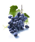 Small dry blue grapes bunch  on white background Stock Photos
