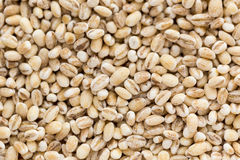Small dry seeds of cereals in background Stock Photos