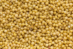 Small dry seeds of cereals in background. Small dry seeds of cereals in food background stock photography