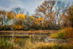 Duck Pond in the Autumn royalty free stock photo