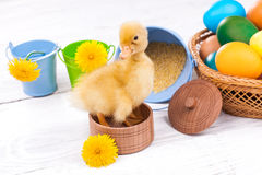 Small duckling with easter eggs Royalty Free Stock Photo