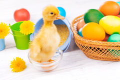 Small duckling with easter eggs Stock Photo