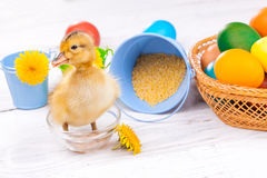 Small duckling with easter eggs Stock Photography