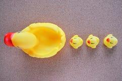 Small ducklings follow their mother. On plywood floor Stock Photos
