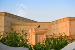 Small eagle sitting on a brick wall pillar with big full moon royalty free stock image