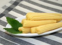 Small ears of corn Stock Image