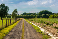 Small earth road in the countryside Royalty Free Stock Photo