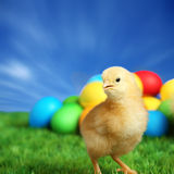 Small easter chick Stock Images