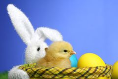 Small easter chick Stock Image