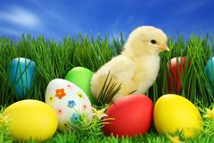 Small easter chick royalty free stock photo