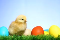 Small easter chick Royalty Free Stock Photography