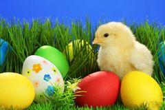 Small easter chicken Royalty Free Stock Photo
