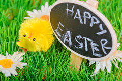 Small easter chicken on the grass Royalty Free Stock Photo