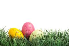 Small easter eggs nestled in the grass. On white background Royalty Free Stock Images