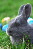 Small easter rabbit Stock Photos