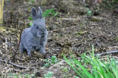 Small easter rabbit Stock Images
