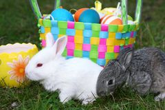 Small easter rabbits Royalty Free Stock Image