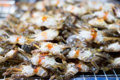 Small egg crabs Stock Image