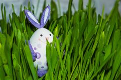 Small Bunny-egg in grass Stock Images