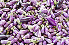 Small eggplants Stock Photography