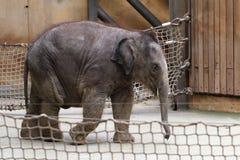Small elephant Royalty Free Stock Photo