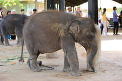 Small elephant in zoo Stock Photos