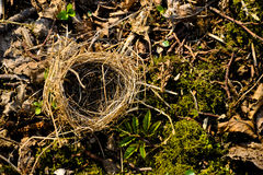 Small empty nest Royalty Free Stock Photo