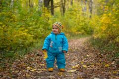 Small European boy in autumn forest Royalty Free Stock Image