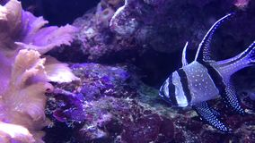 Small exotic fish stock video