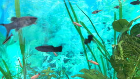 Small exotic fishes in Aquarium stock footage