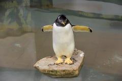 Small fairy penguin Stock Image