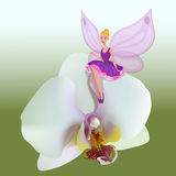 Small fairy sitting on a orchid. Royalty Free Stock Image