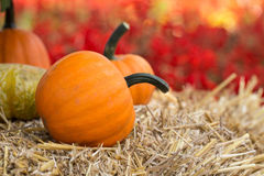 A Small Fall Pumpkin and flowers Stock Photos