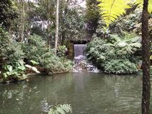 Small fall of water in the middle of the garden. Small waterfall in the middle of the Botanical Garden located in the city Royalty Free Stock Photos