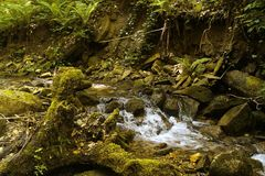 Small falls in a thicket, the green jungle Royalty Free Stock Photo