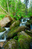 Small falls in a wood. Royalty Free Stock Photography