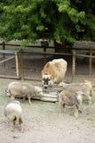 Small Farm royalty free stock photo