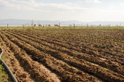 Small farm irrigation Stock Image