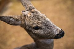 Small fawns look at the frame royalty free stock photos