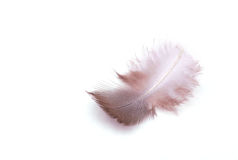 The small feather on a white background Stock Photo