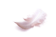 The small feather on a white background Royalty Free Stock Photos