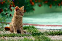 Small feline Stock Image